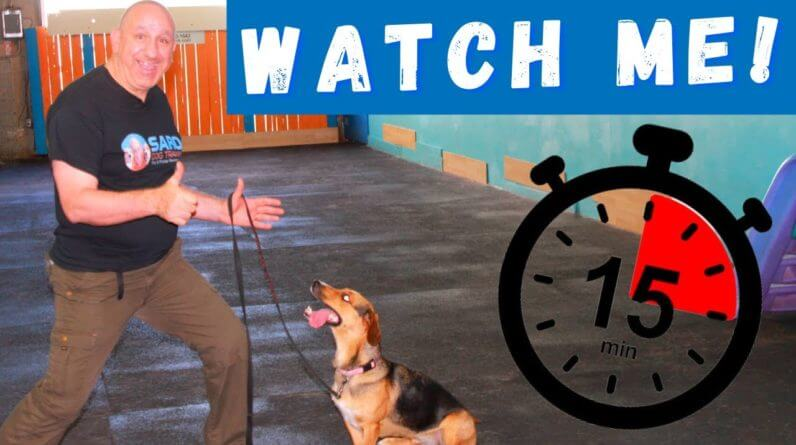 How To Train Your Dog In 15 Minutes | Live Dog Training Session