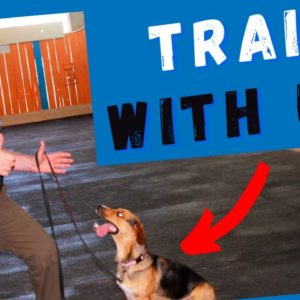 Live Dog Training Session Preview - Coming Soon.
