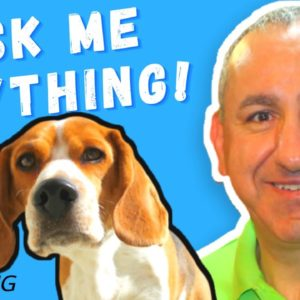 Dog Training Without Using Treats Or Food. ☝️Ask Me Anything!