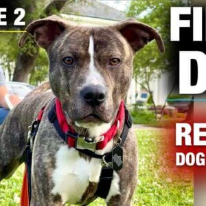 The FIRST FULL DAY with a TOTALLY UNTRAINED Pit Bull
