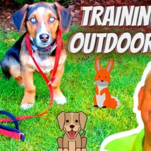 Training Dogs With Distractions At The Dog Parks