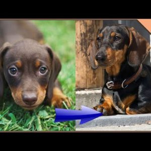30 Dog Breeds From Puppy To Adult | Dog World