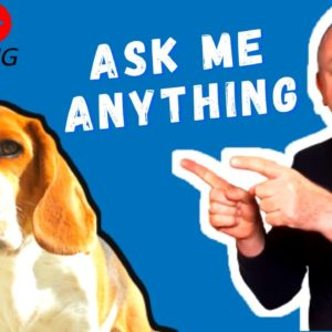 Dog training and dog related questions answered.