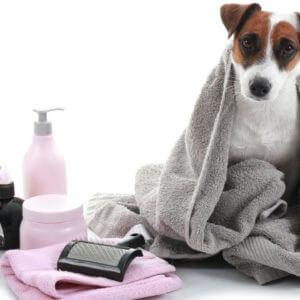 Homemade Dog Grooming Kit: How To Make One
