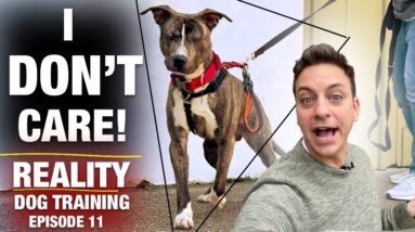 I Don't Care What Anyone Says! This Dog is Still NOT TRAINED! [Reality Dog Training Ep. 11]
