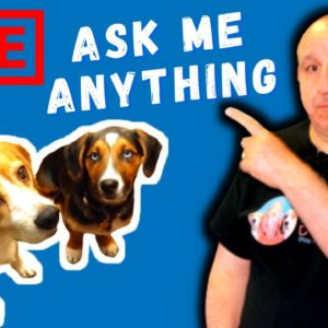 Your DOG training and DOG related questions answered.