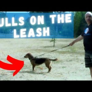 1 QUICK Tip To Stop Your Dog From Pulling On The Leash