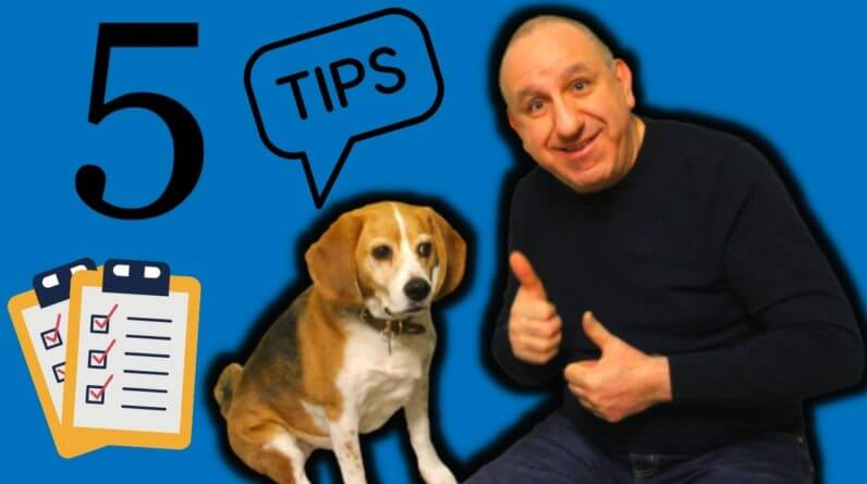 5 Dog Training Tips For Dog Owners By Saro Dog Training