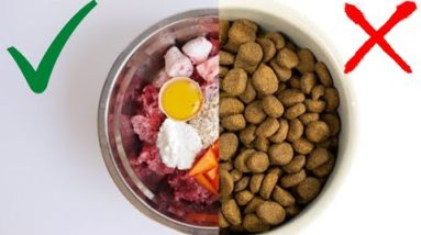 Best Natural Foods For Dogs - Feed The Need Of Your Dog