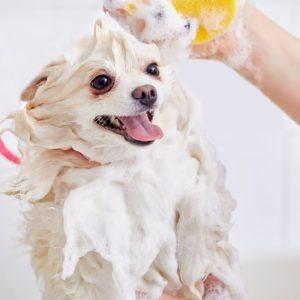 DIY Whitening Dog Shampoo Recipe