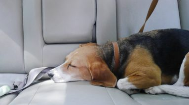 How To Prevent Car Sickness in Dogs