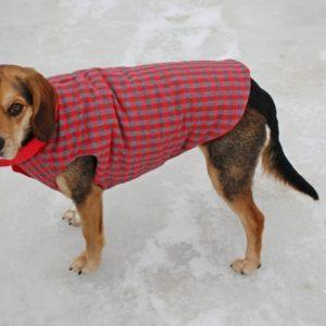 How To Put On A Dog Jacket
