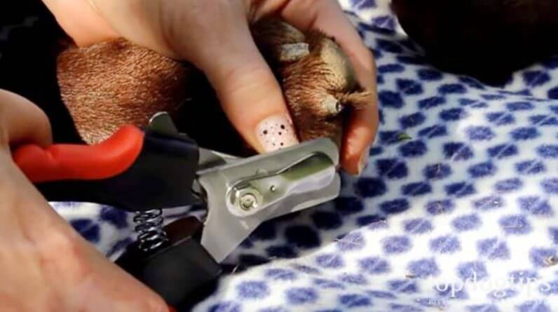 How To Trim Dog Nails Without Clipping the Quick