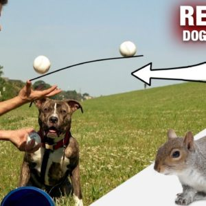 THESE are the Dog Training Issues to Worry About!!! [REALITY DOG TRAINING]