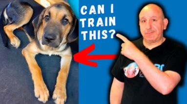 Training A Puppy Without Treats - What Have I done|?