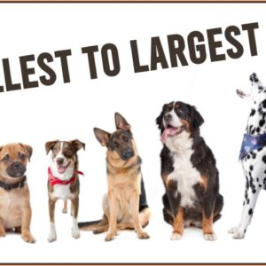 Dog Breeds From Smallest To Largest Dog Breed | Dog World
