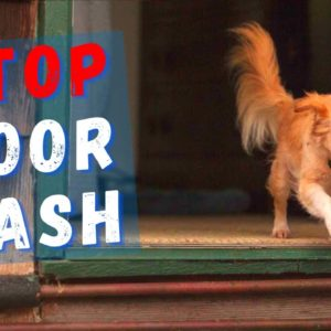 My Dog Runs Out Of The Door - How To Stop It?