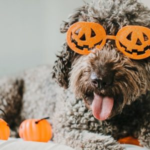 8 Halloween Safety Tips for Dogs