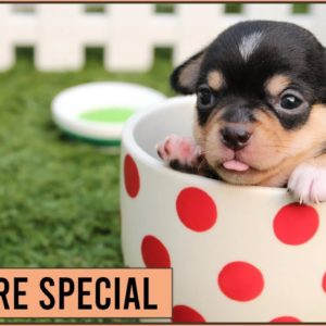 This Is Why Dogs Are Special | Dog World