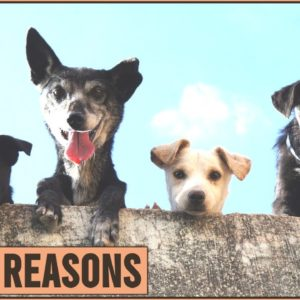 Top 10 Reasons Why You Need A Dog In Your Life | Dog World